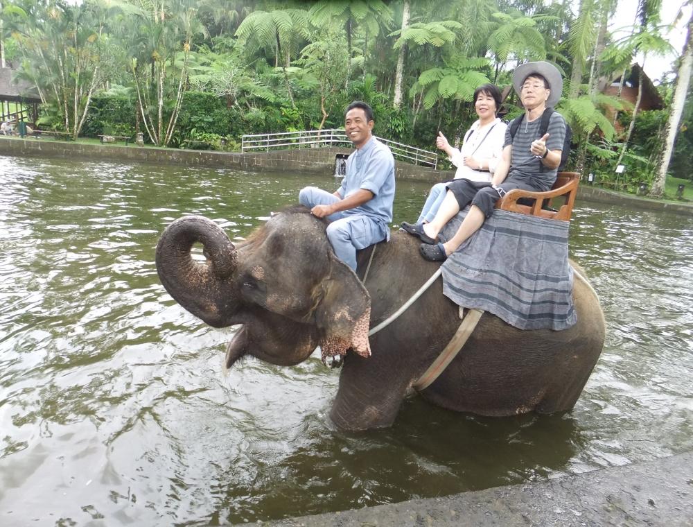 エレファントサファリライド(象に乗れます)